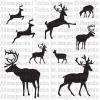 TM50 - Deers & Reindeers